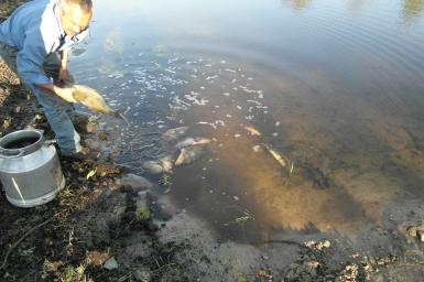 Зарыбление водоёму у базы
