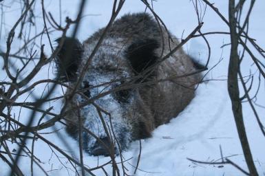 Охота на Припяти